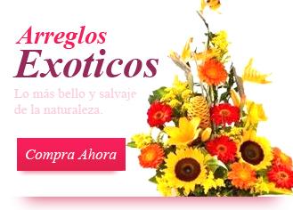 Floreria Laura Creando Tu Ambiente